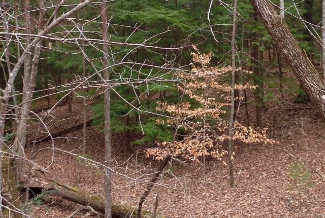 Identifying trees, part 1