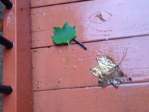 leaves wet ramp
